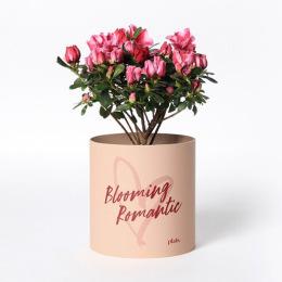 사랑을 담은 식물, 화분커버 세트 2종